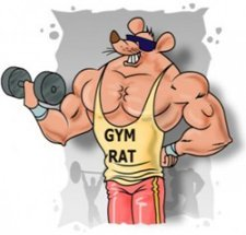 Gym rats can be rude and intimidating