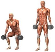 Maintain Muscle Mass By Exercising